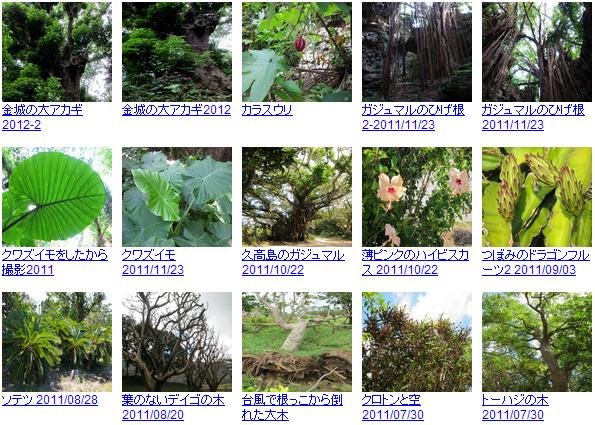 沖縄の無料写真素材 あじまぁ 植物写真素材