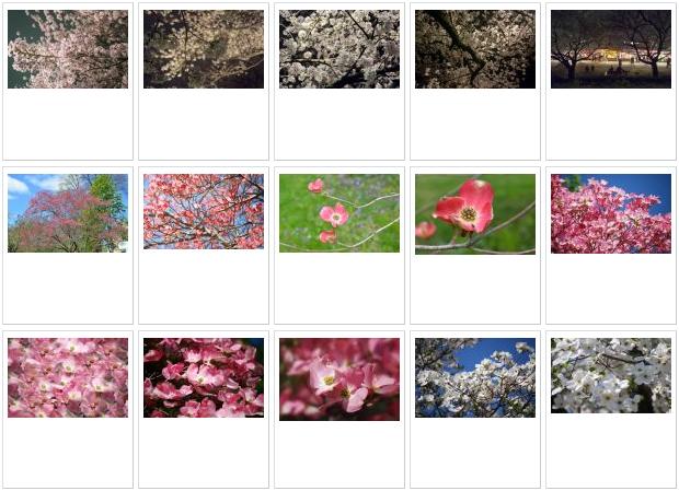 写真素材足成の 花・植物写真