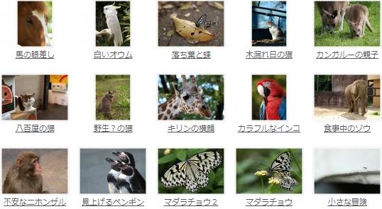 フォトマテリアル 動物写真素材