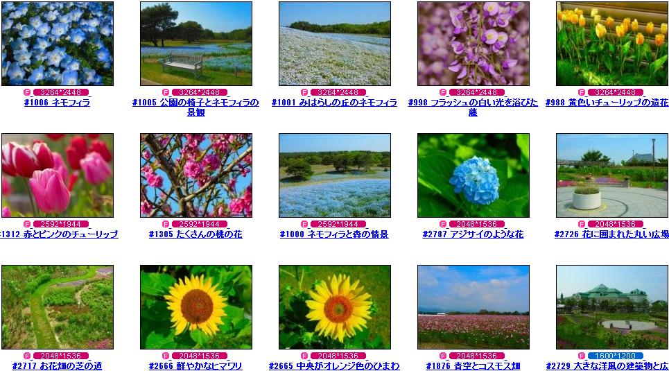 フリー写真素材 Futta.NET 花写真