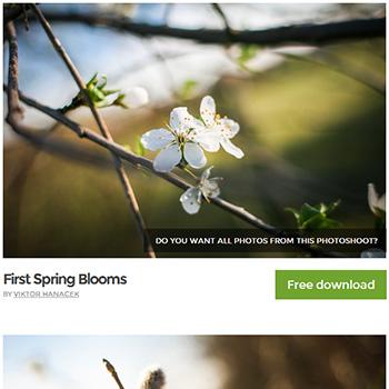 picjumbo 写真素材サイト