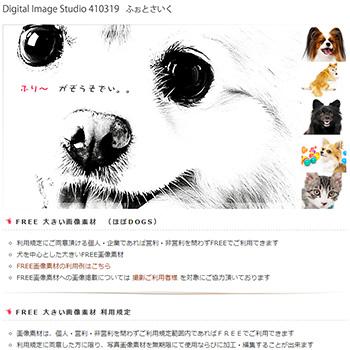 犬のフリー写真素材 ふぉとさいく